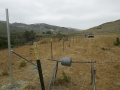 Cattle_Fencing__6-12_014
