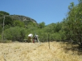 Cattle_Fencing__6-16_001
