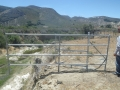 Cattle_Fencing__6-19_013