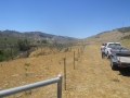 Cattle_Fencing__6-19_014