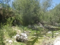 Cattle_Fencing__6-19_016