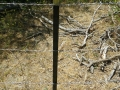 Cattle_Fencing__6-4_016