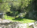 Cattle_Fencing__6-9_010