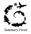 sanctuary_forest_106x118