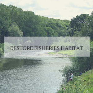 Donations to FishAmerica will restore fisheries habitat